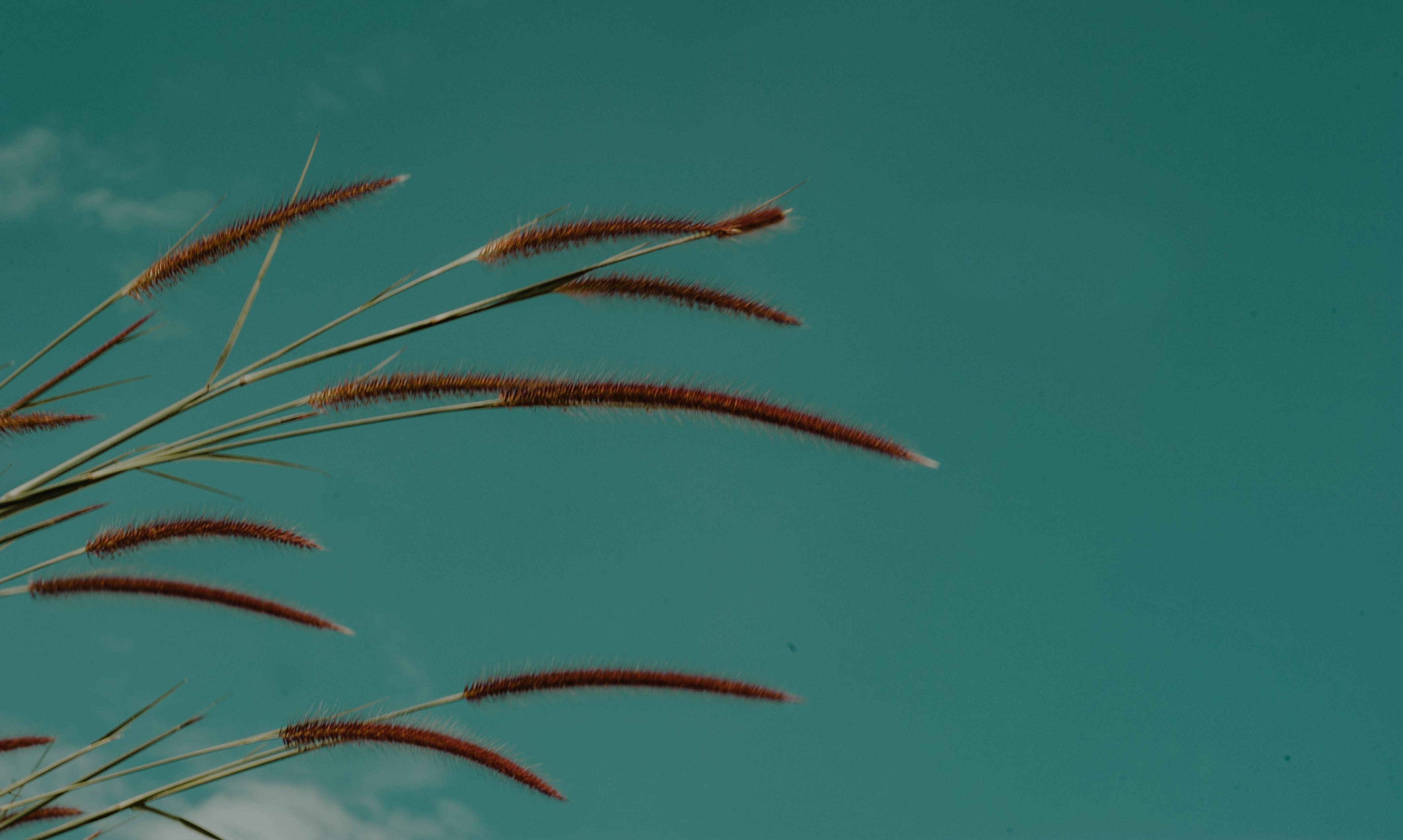 Green Grass Focus Photo