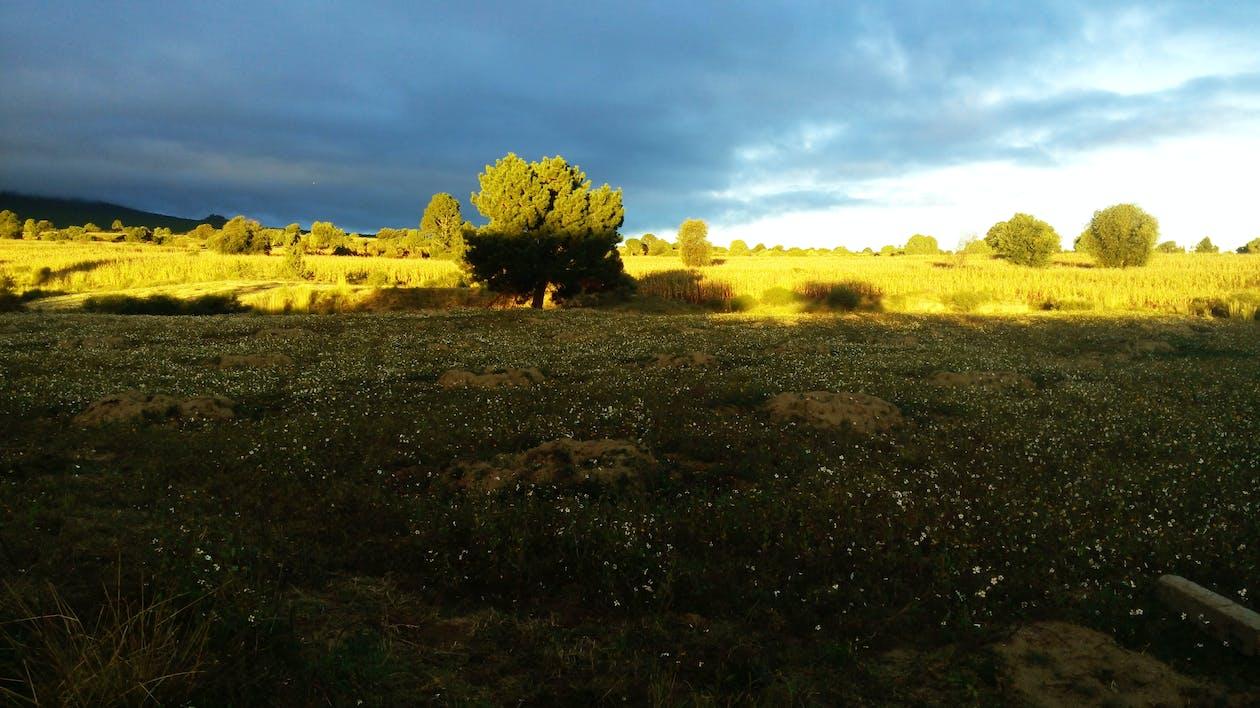 alba, albero, cielo nuvoloso