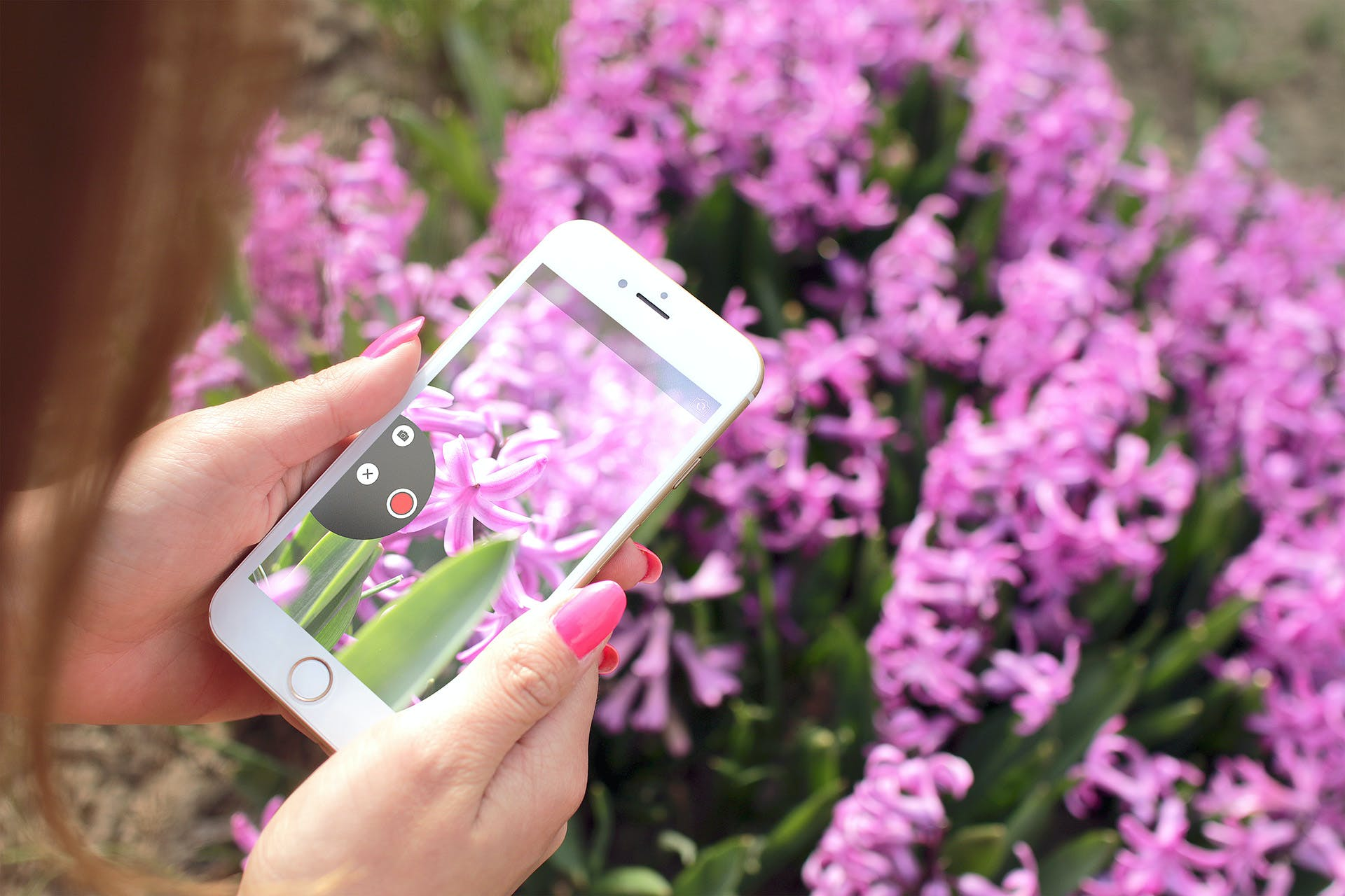 Close-up Photography of Woman Holding Gold Iphone 6 Displaying Pink Petaled Flower