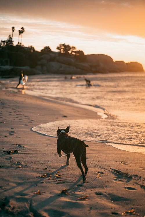 Free stock photo of action, beach, Cape Town
