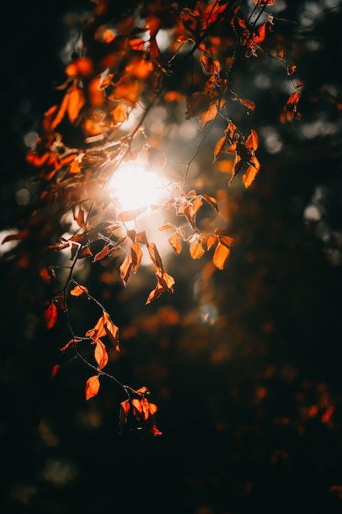 คลังภาพถ่ายฟรี ของ กลางวัน, ธรรมชาติ, สีฤดูใบไม้ร่วง