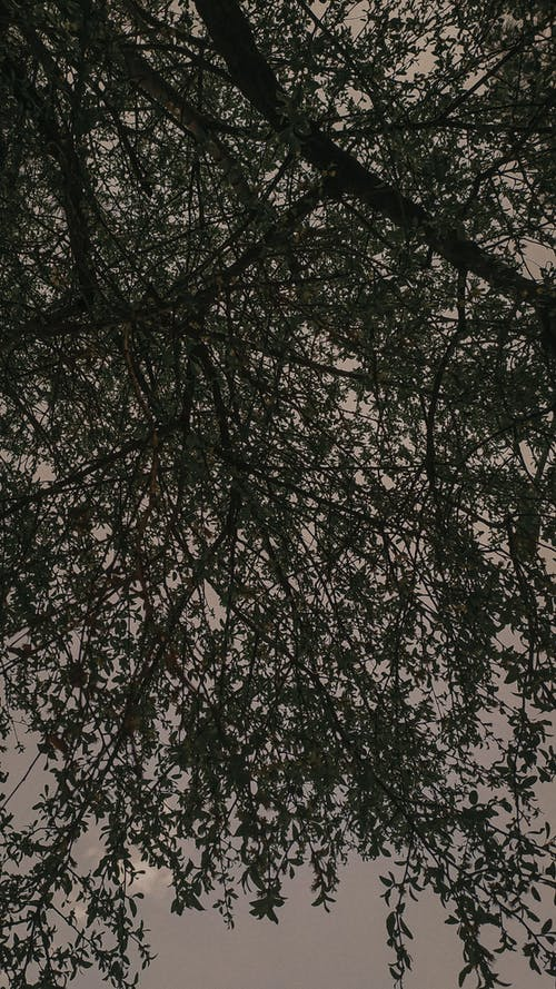 Tree Branches and Leaves