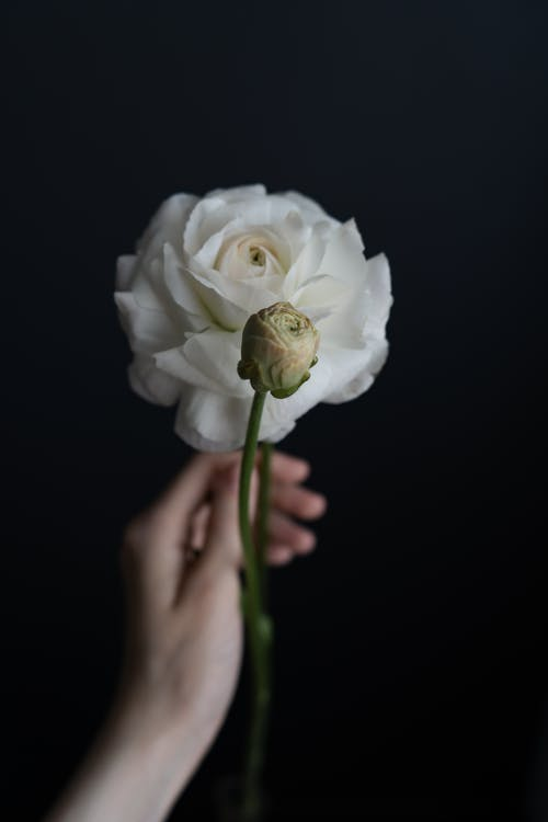 Crop unrecognizable female touching blooming white lisianthus with delicate petals and bud on wavy stem