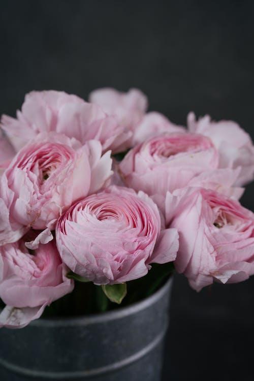 Kostnadsfri bild av blommar, blommor, blomning