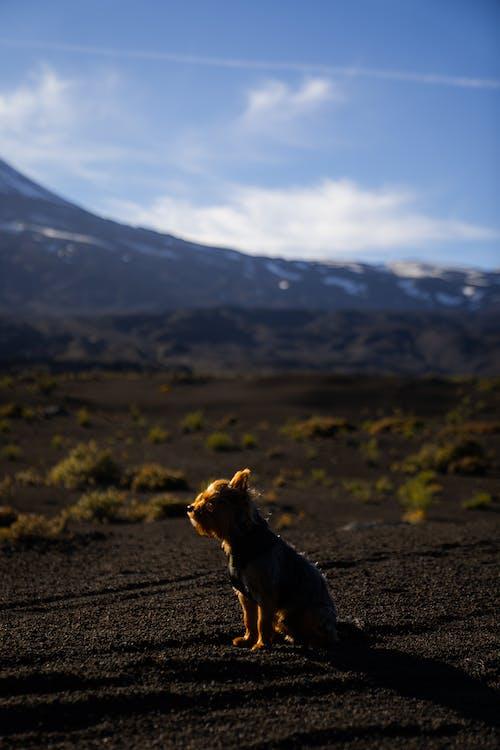 Black and Tan Short Coat Medium Sized Dog on Dirt Road Near Mountain