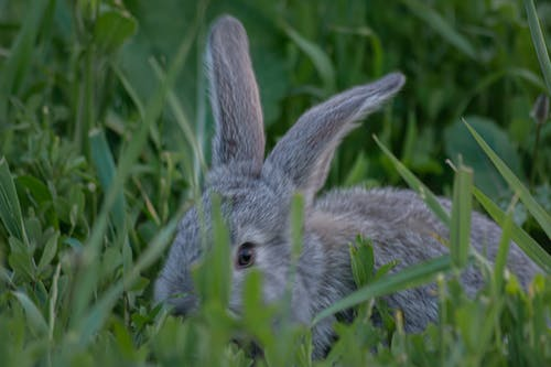 Free stock photo of animal, animal photography, grass