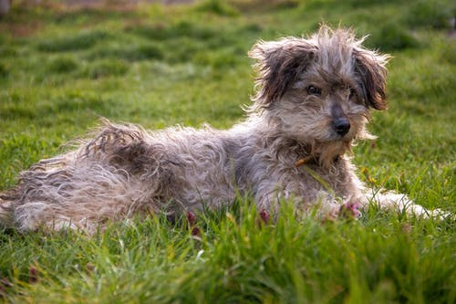 White and Brown Long Coated Dog on the Green Grass Field