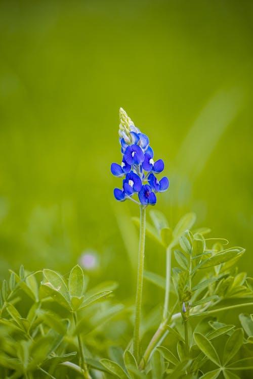 Kostenloses Stock Foto zu angiospermen, aroma, blatt