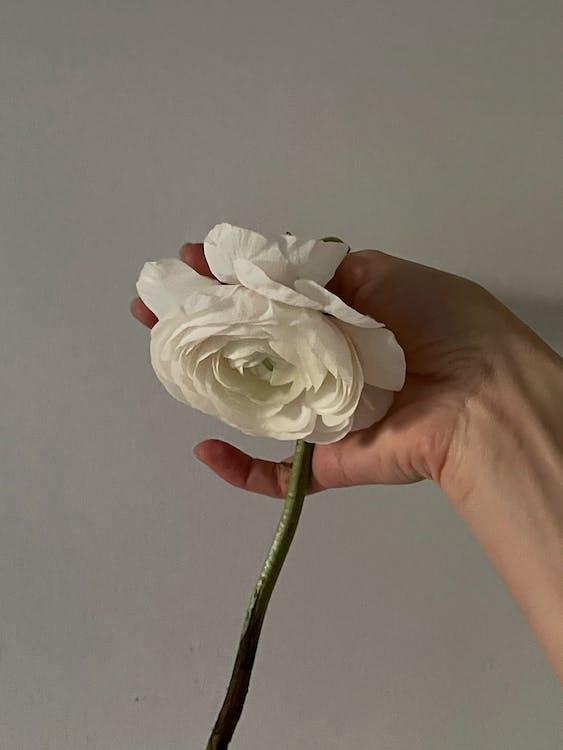 Person holding white flower on stem
