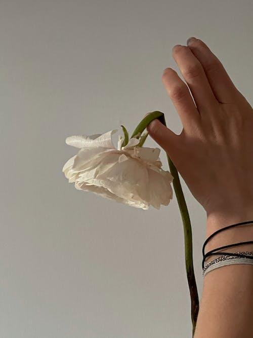 가지, 깨지기 쉬운, 꽃의 무료 스톡 사진