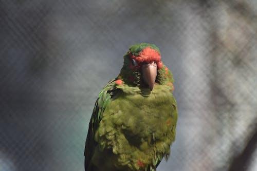 Free stock photo of animal, animal body part, animal eye