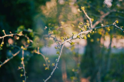 Free stock photo of beautiful nature, blooming flower, tree