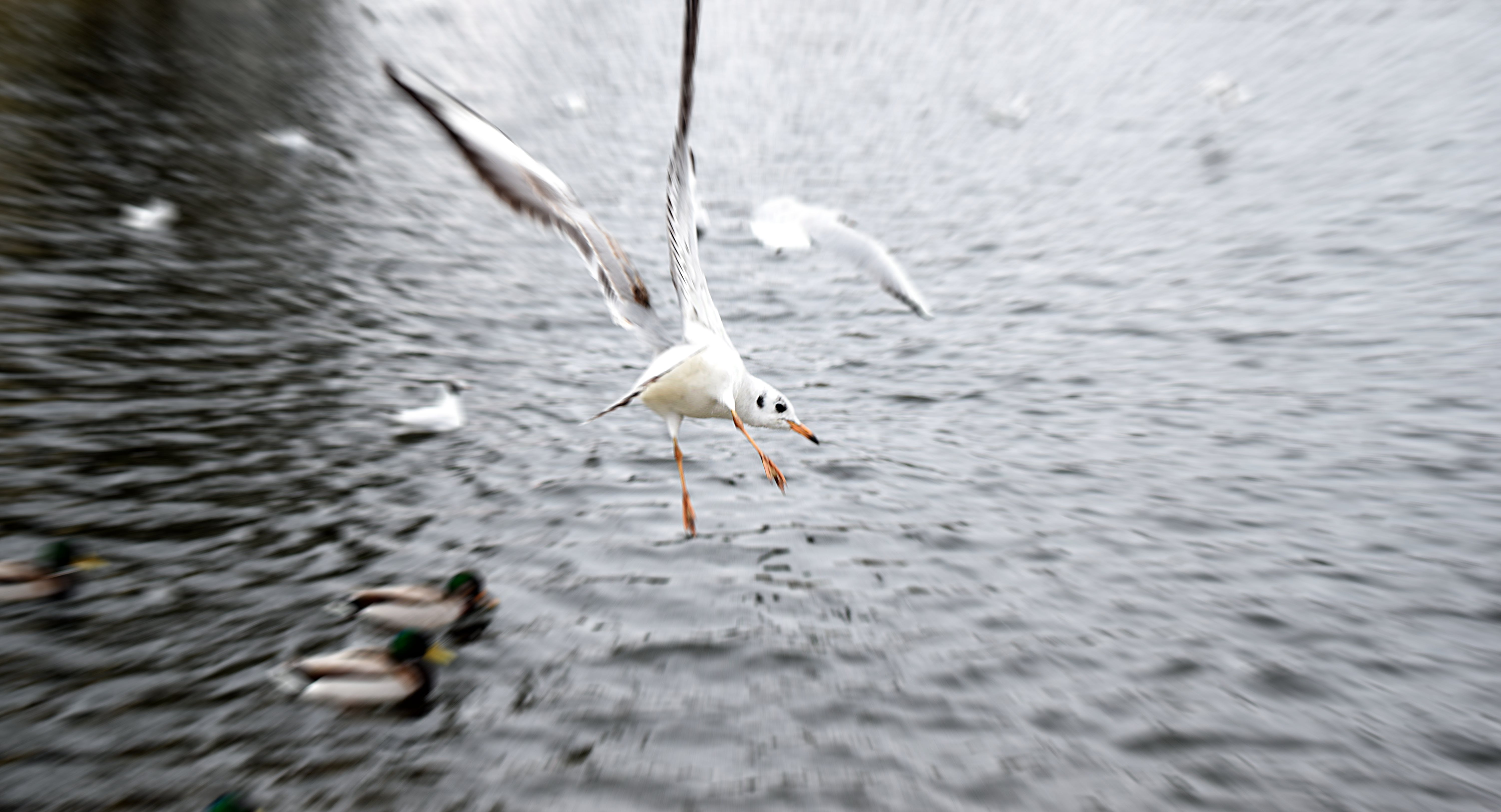 Birds Flying on Body of Water during Daytime