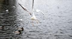 sea, flight, flying