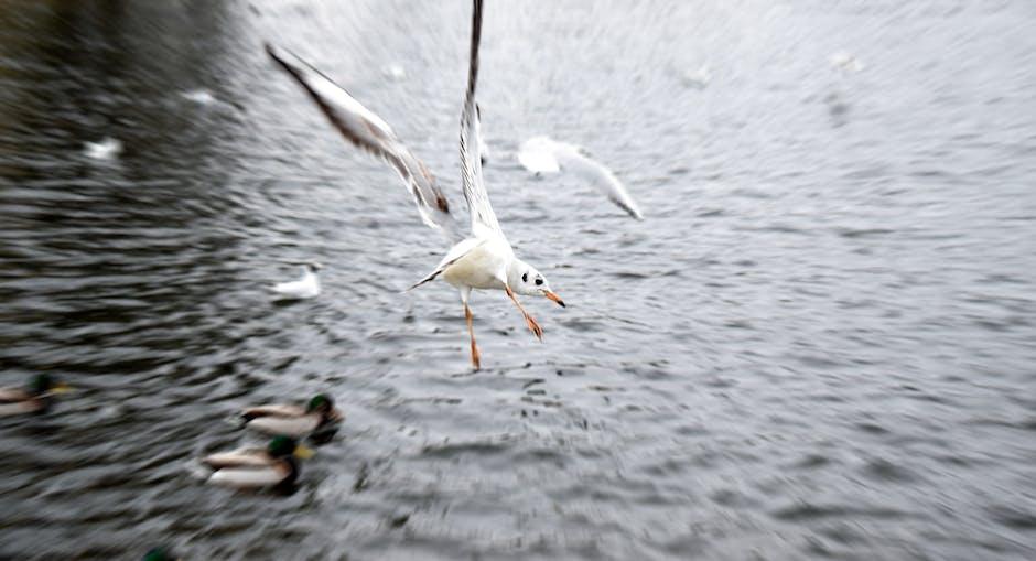 New free stock photo of sea, flight, flying
