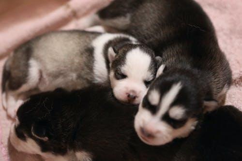 Photos gratuites de animal, animal de compagnie, bébé