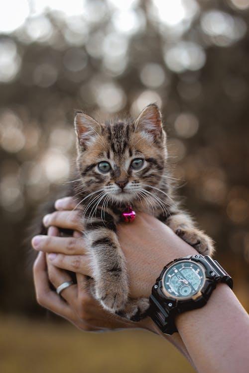 Immagine gratuita di adorabile, amicizia, animale