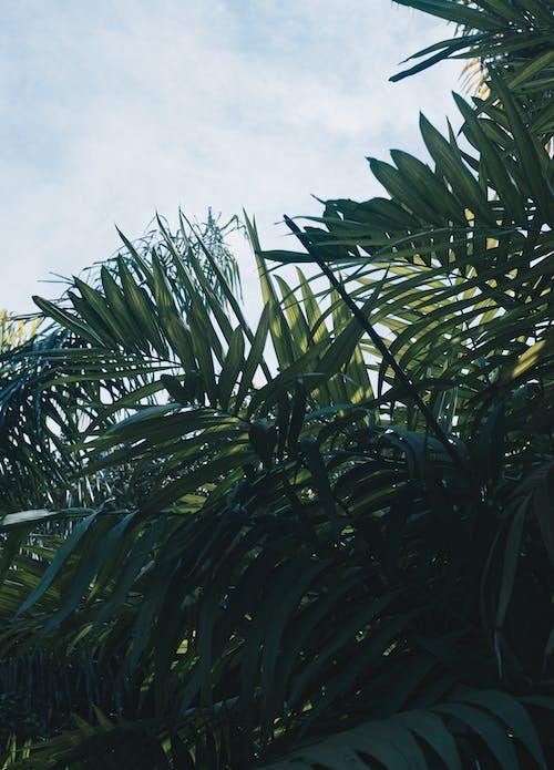 Fotos de stock gratuitas de agua, árbol, coco