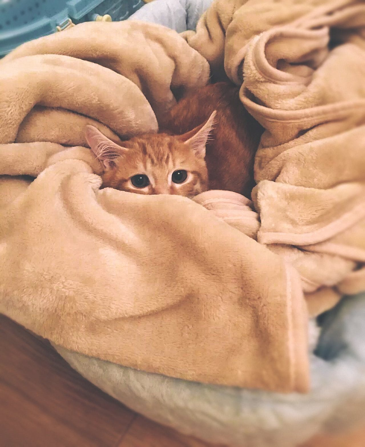 Orange Tabby Cat on Brown Textile