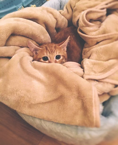 Оранжевый полосатый кот на коричневом текстиле