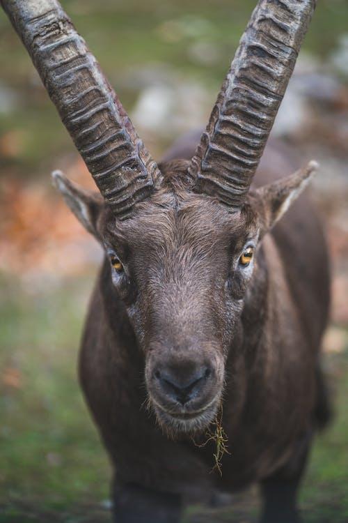 Δωρεάν στοκ φωτογραφιών με άγρια ζώα, άγρια φύση, άγριο ζώο