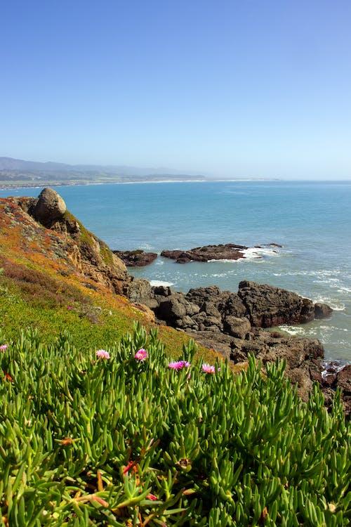 Ảnh lưu trữ miễn phí về biển, bờ biển, california