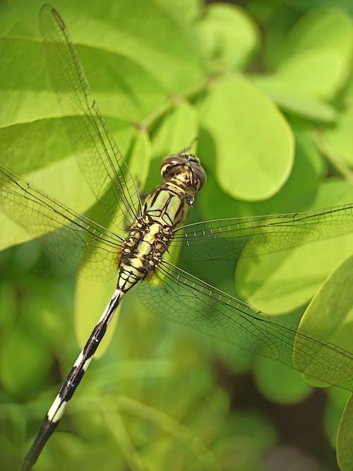 Gratis lagerfoto af blad, grøn, guldsmed