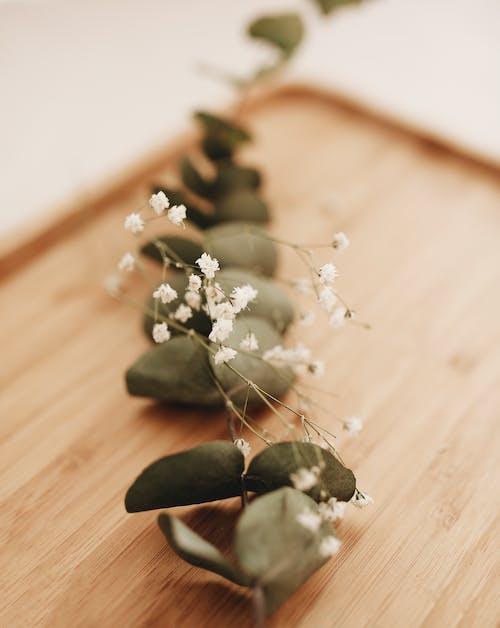Eucalyptus twig and gypsophila on table