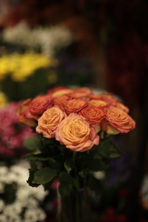 Bouquet of flowers in shop