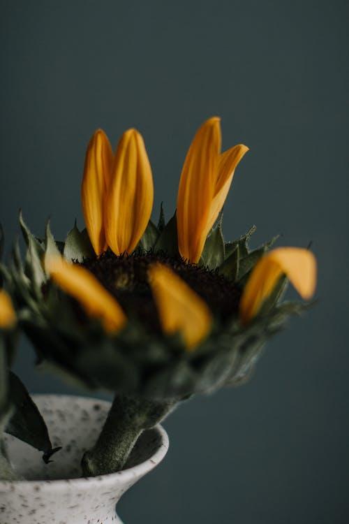 Flower with fallen petals in vase