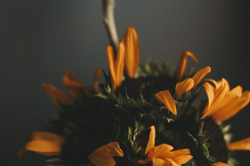 Old bouquet with yellow petals