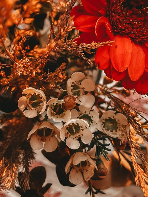 From above bunch of assorted flowers with gentle colorful petals placed together during blooming season in light room at home
