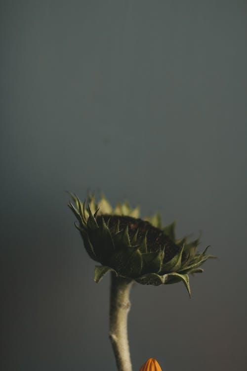 Foto profissional grátis de caule, close, flor