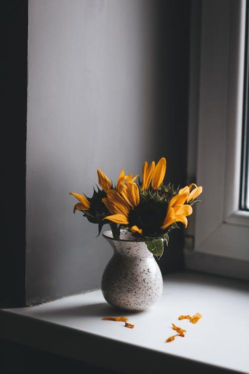 Tender fragrant yellow sunflowers in ceramic vase placed on windowsill in light room