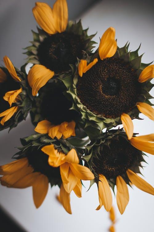 Bunch of yellow sunflowers on windowsill