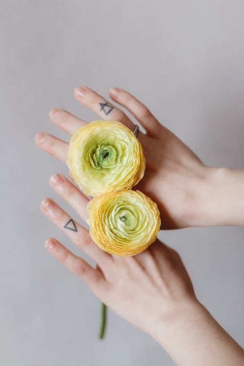 Crop faceless woman demonstrating tender ranunculus flowers on hands