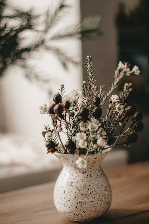 คลังภาพถ่ายฟรี ของ chamelaucium, waxflower, กลิ่น