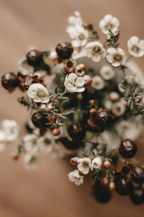 Tender white waxflowers in vase in light room