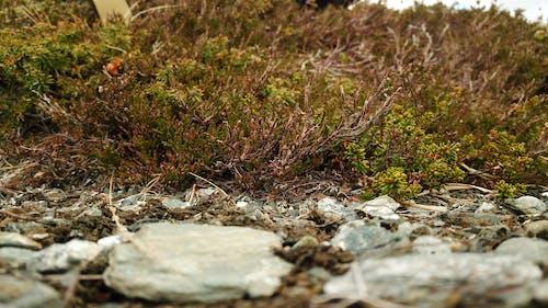 Free stock photo of beautiful, beautiful nature, bushes