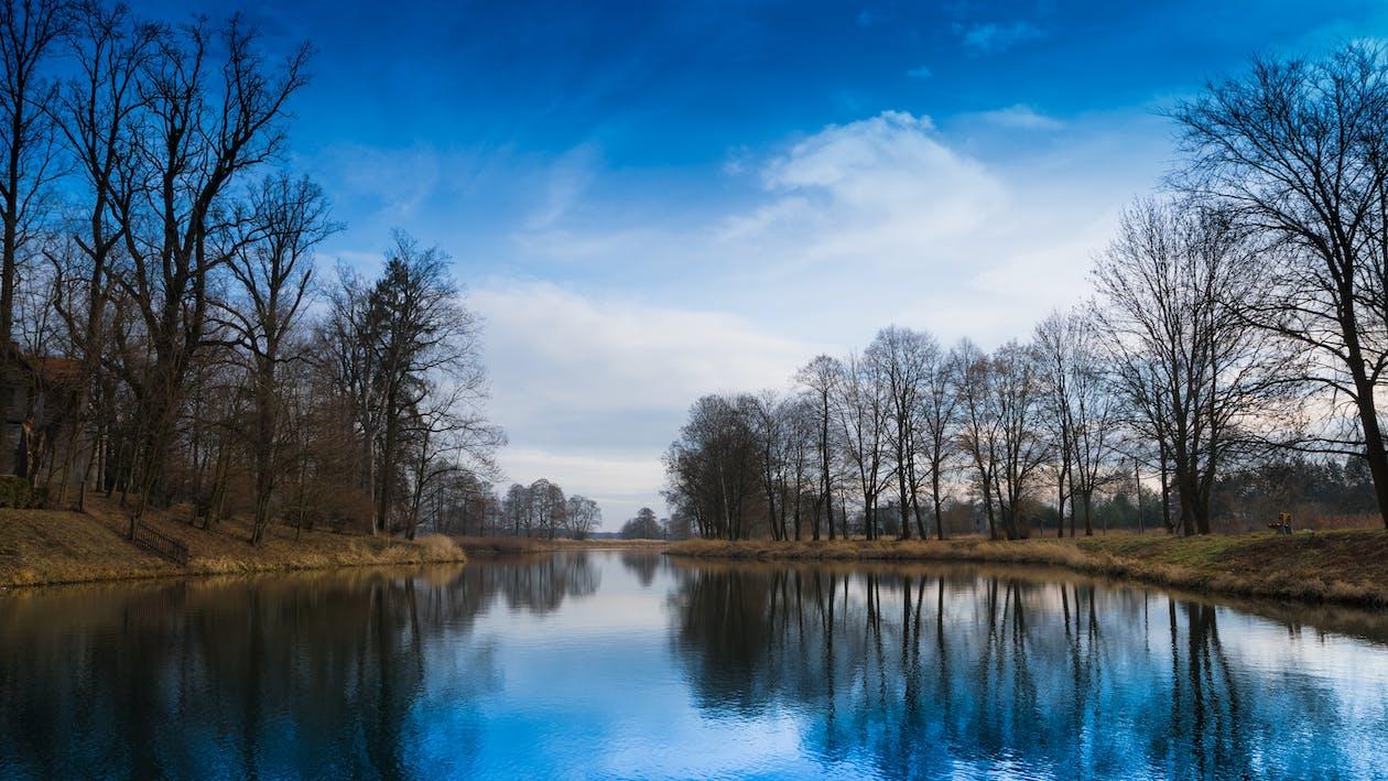 água, árvores, cênico