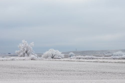 Snow Covered Trees on Snow Covered Ground Under White Cloudy Sky