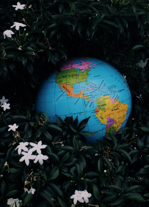 Small colorful Earth globe toy placed among dark green leaves and white flowers of plant in nature