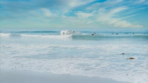 surfboarders, 人, 休閒 的 免费素材图片