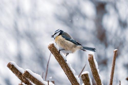 Fotos de stock gratuitas de animal, aviar, de cerca