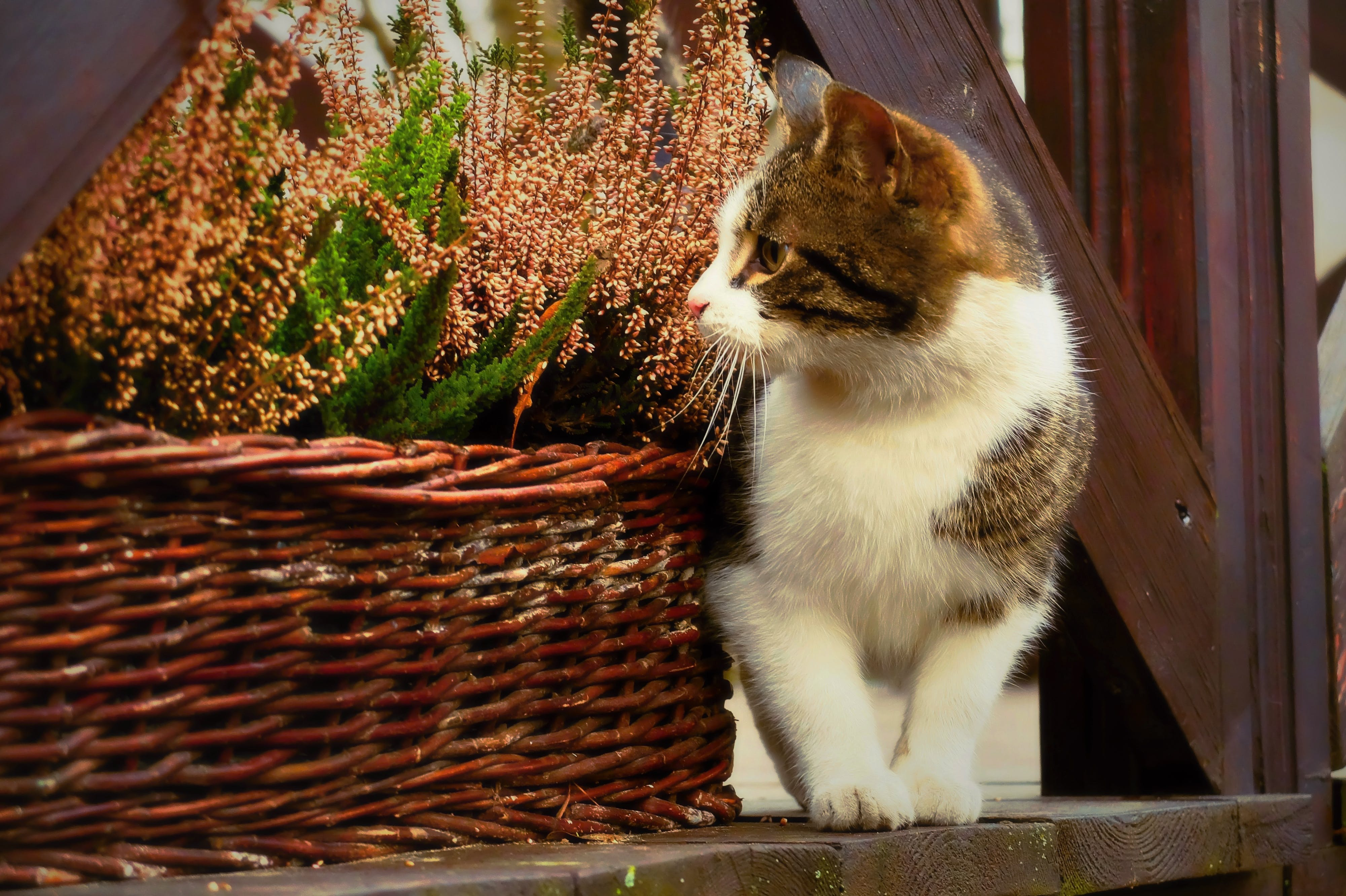 Free stock photo of animal, basket, cat, cats