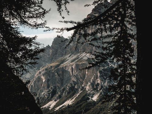 Photos gratuites de arbre, aube, aventure