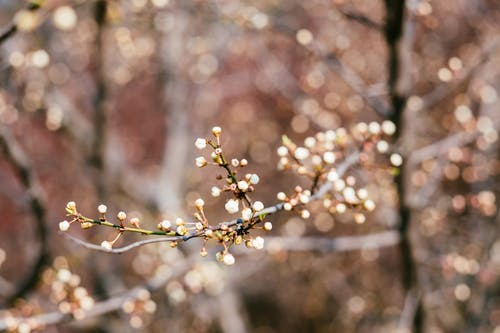 Free stock photo of blossom, bokeh, spring