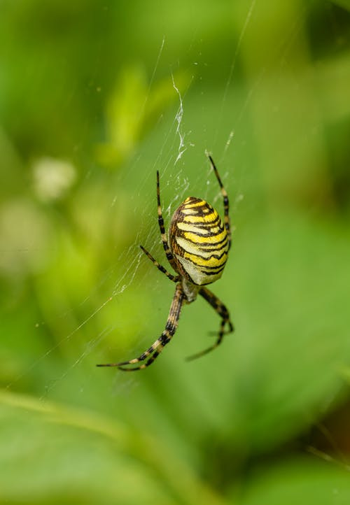 Yellow and Black Spider on Web in Close Up Photography