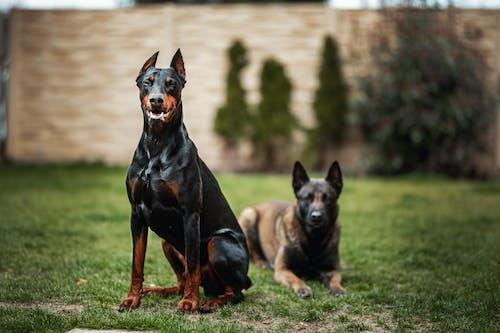 Fotos de stock gratuitas de amante de los perros, animal, caballero