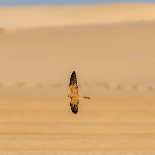 Wild bird soaring in nature